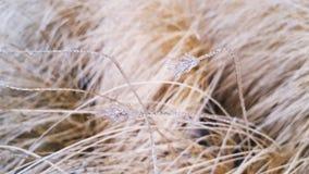 模糊的结冰的干燥杂草草背景 库存图片