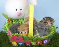 模糊蓬松锐化在篮子上面的灰色4星期的平纹小猫  免版税图库摄影