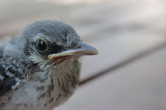 模仿鸟 免版税库存照片