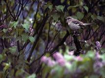 模仿鸟 免版税图库摄影
