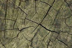 横剖面结构树 图库摄影