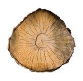 横剖面结构树 免版税库存照片