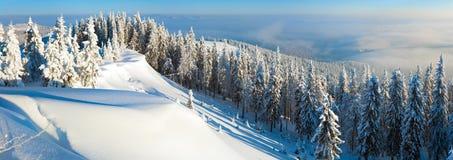 横向全景随风飘飞的雪冬天 免版税库存图片