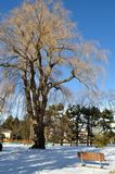 横向公园冬天 库存图片