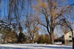 横向公园冬天 免版税图库摄影