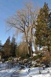 横向公园冬天 库存照片