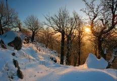 横向剪影日落结构树冬天 库存图片
