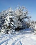 横向在冬天 库存照片