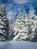 横向塞尔维亚冬天 免版税图库摄影