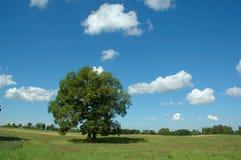 横向夏天结构树 免版税库存照片