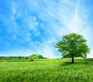 横向夏天 免版税库存照片