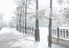 横向多雪的冬天 冷淡的树在城市公园 免版税库存图片