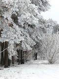横向多雪的冬天 图库摄影