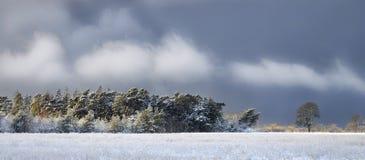横向多雪的冬天 免版税库存图片
