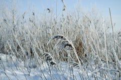 横向多雪的冬天 免版税图库摄影