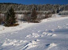 横向多雪的冬天 库存图片