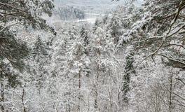 横向多雪的结构树冬天 库存图片