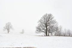 横向多雪的结构树冬天 免版税库存照片