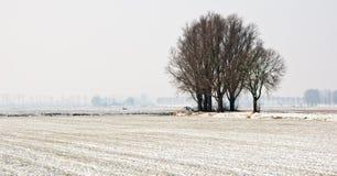 横向多雪的结构树 免版税库存照片