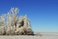 横向大草原冬天 库存照片