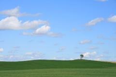 横向孤立结构树 免版税库存图片