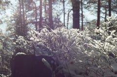 横向山晴朗的冬天 免版税库存照片