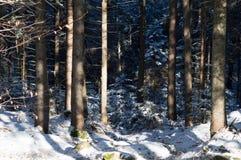 横向山晴朗的冬天 免版税图库摄影
