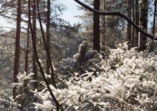 横向山晴朗的冬天 库存图片