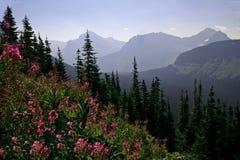 横向山紫色野花 免版税库存图片