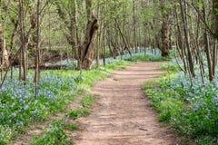 横向布尔朗战役Nat'l会开蓝色钟形花的草线索弗吉尼亚 免版税图库摄影