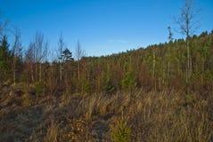 横向挪威森林 库存照片