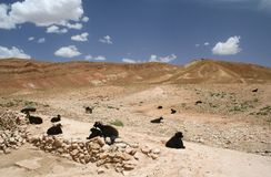横向摩洛哥人 免版税图库摄影