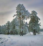 横向新的多雪的森林年 免版税库存图片