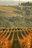 横向日落wineyard 免版税图库摄影