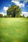 横向春天结构树 库存图片