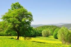 横向春天 免版税库存图片