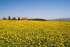 横向春天 免版税图库摄影