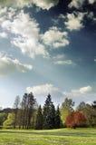 横向春天 库存照片
