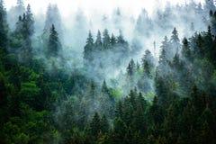 横向有薄雾的山 库存照片