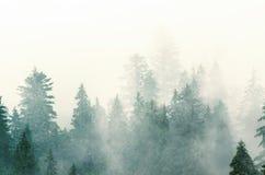 横向有薄雾的山 库存图片