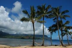 横向棕榈树 免版税库存照片