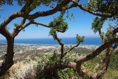 横向海运结构树 库存图片