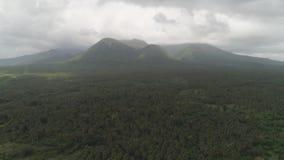 横向热带的棕榈树 菲律宾,吕宋 股票视频