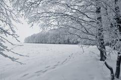 横向白色冬天 免版税库存照片