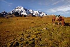 横向秘鲁人 免版税库存照片