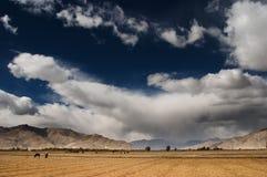 横向藏语 库存图片