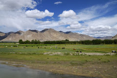 横向西藏 库存图片