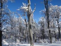 横向雪多雪的故事结构树冬天 库存图片