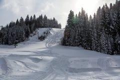 横向雪多雪的故事结构树冬天 库存照片