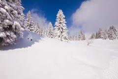 横向雪结构树冬天 免版税库存图片